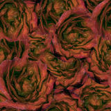 Roses.Seamless background. Flowers. Royalty Free Stock Photography