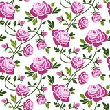 Roses seamless pattern Royalty Free Stock Images