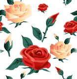 Roses seamless on white background. Vector Stock Image
