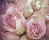 Roses roses sensibles avec de petites fleurs blanches dans le bouquet Images stock