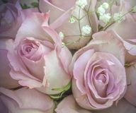 Roses roses sensibles avec de petites fleurs blanches dans le bouquet Photo libre de droits