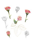 Roses  set Stock Photography