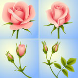 Roses set blue. Set of four pink roses on blue background Stock Images