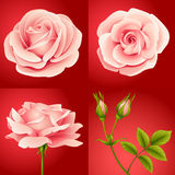 Roses set red. Set of four pink roses on red background royalty free illustration