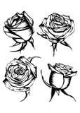 Roses set Stock Image