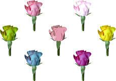 Roses set Royalty Free Stock Photo