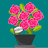 Roses. Seven roses in a pot at a marine background vector illustration