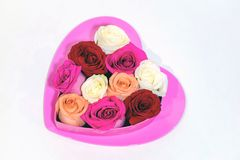 Hot pink heart with roses in heart shaped box on top. Stock Image