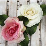 Roses shabby chic stock photos