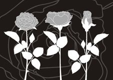 Roses silhouettes Royalty Free Stock Photo