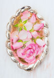 Roses in silver bowl with water Stock Photos