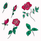 Roses sketch Royalty Free Stock Photography