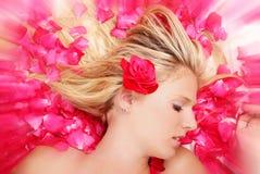Roses sleeping Stock Photos