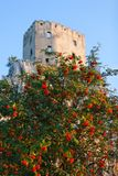 Roses on Sleeping beauty`s Castle - tower royalty free stock photos