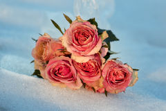 Roses in the snow. A bouquet of pink roses lying in the snow on a cold winter day sunset royalty free stock photos