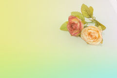 Roses in soft color. Made with blur style for background Stock Image