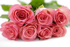 Roses with soft focus Royalty Free Stock Photos