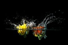 Roses splash. In water with droplets Stock Images