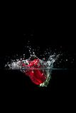 Roses splash. In water with droplets Royalty Free Stock Photos