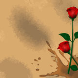 Roses and Stain Royalty Free Stock Images