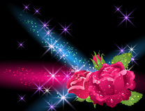 Roses and stars Stock Images