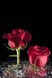 Roses in stirred water. Royalty Free Stock Photos
