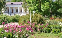 Roses in the summer garden Stock Image