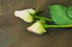 Roses sur la plage, symboles Photo libre de droits