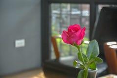 Roses roses sur la table, le concept de l'amour et coeurs Photographie stock