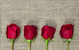 4 roses sur la toile de jute Photo stock