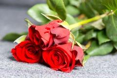 Roses sur la tombe Image stock