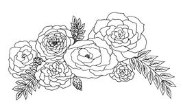 Roses sur le fond blanc Image stock