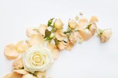 Roses sur le fond blanc Image libre de droits