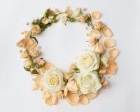 Roses sur le fond blanc Photo stock
