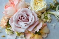 Roses sur le fond gris Photos libres de droits
