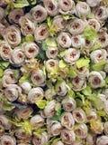 Roses sur le mur Photos libres de droits