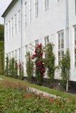 Roses sur le mur Photo libre de droits