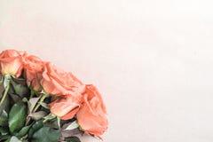 Roses sur le papier brun Photos stock
