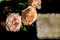Roses sur le plancher Photos libres de droits