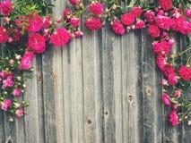 Roses sur le rétro fond texturisé dénommé en bois superficiel par les agents Romant Photos libres de droits