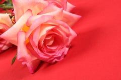 Roses sur le rouge Image libre de droits
