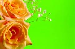 Roses sur le vert images libres de droits