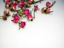 Roses roses sur un fond gris photographie stock libre de droits