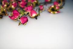 Roses roses sur un fond gris photos stock