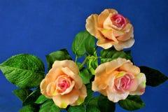 Roses sur un fond lumineux de ciel bleu, fleur impeccable et exemplaire photos stock