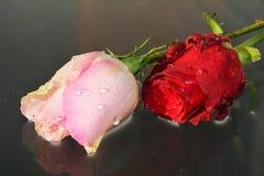 Roses, symboles d'appréciation Photos stock