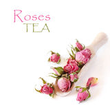 Roses tea. Stock Photo