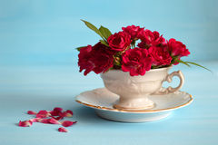 Roses in tea cup on blue background Stock Photo