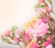 Roses on tender background with color filters Royalty Free Stock Photo