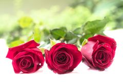 Roses. Three roses on the ground Royalty Free Stock Photography